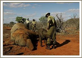During Shimba's rescue